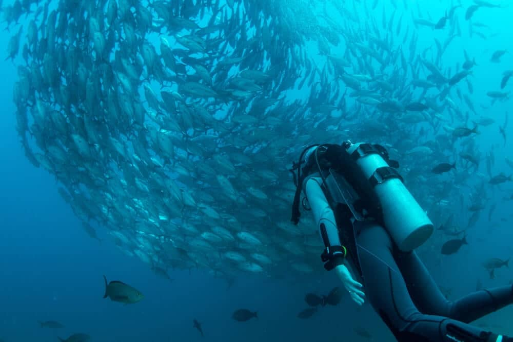 Scuba-Focused Platform Makes Booking Diving Trips Easier